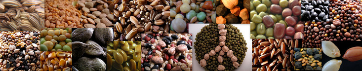 Our Most Popular Seeds