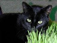 Critter Crops