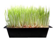 Sprouting Basics