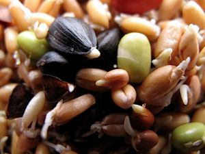 Lil Bird Sprout Mix