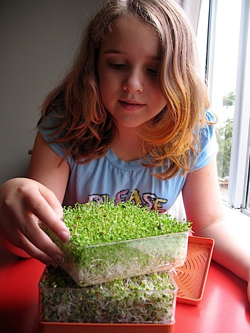Sprouts for tweens